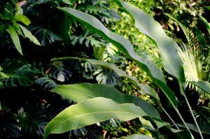 木漏れ日があたる植物