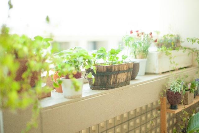 明るい窓辺の観葉植物