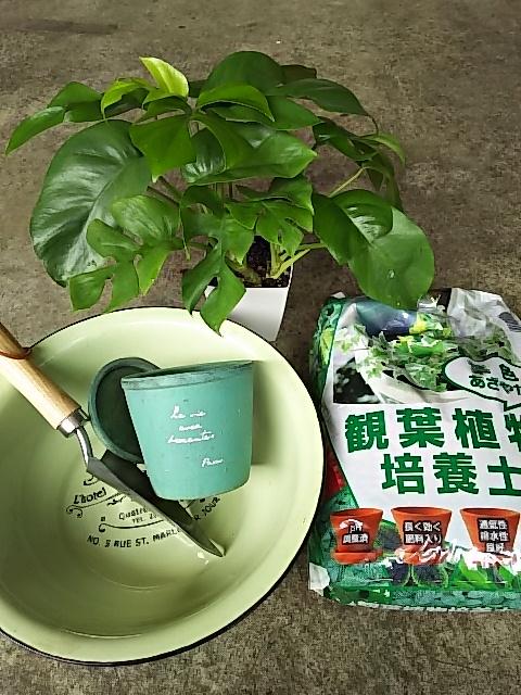 植え替え道具と観葉植物
