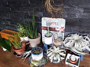 観葉植物のかため置き
