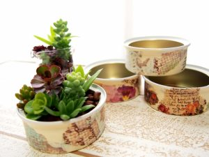 リメ缶と多肉植物の寄せ植え