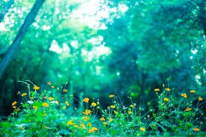 森の中の黄色い小花