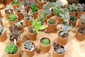 色々な多肉植物