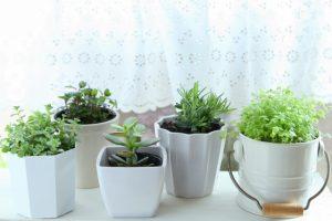 レースカーテン越しの植物