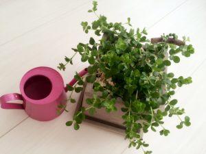 ジョーロと観葉植物