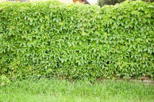 茂ったグリーン