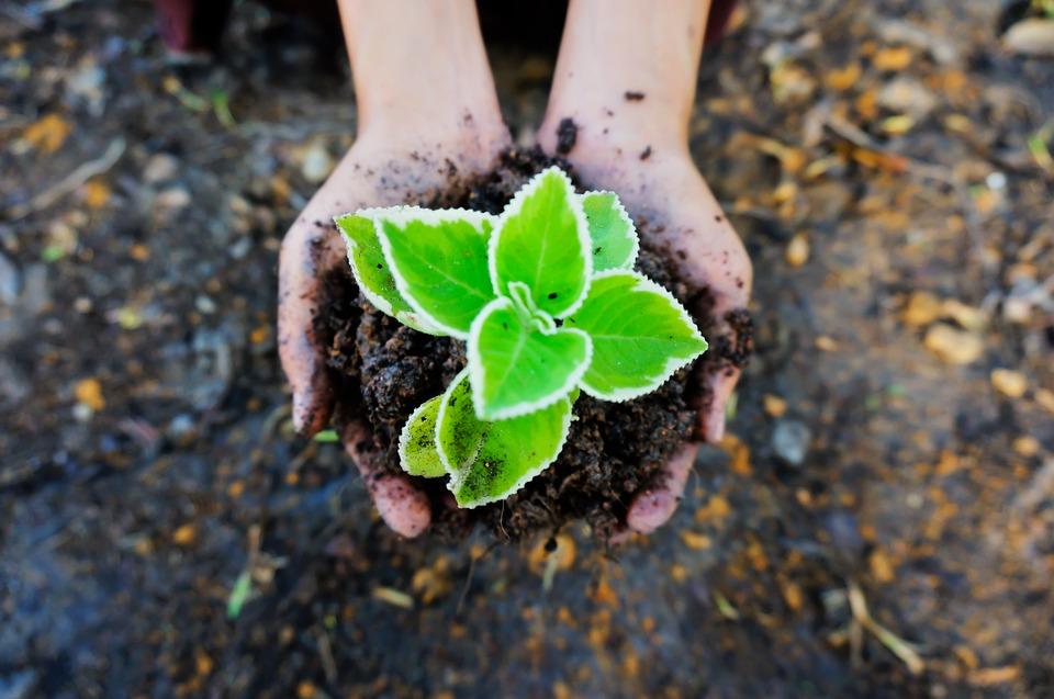 手ですくった植物の苗