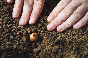 球根の植えつけ