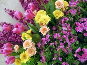 数種類の花の寄せ植え