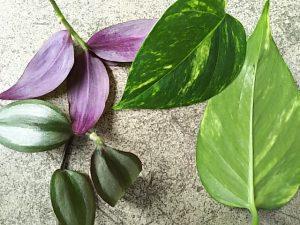 葉の表と裏