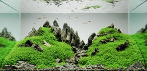 水草水槽 キューバパールグラス