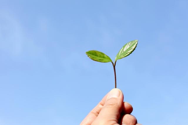 空にかざす新芽