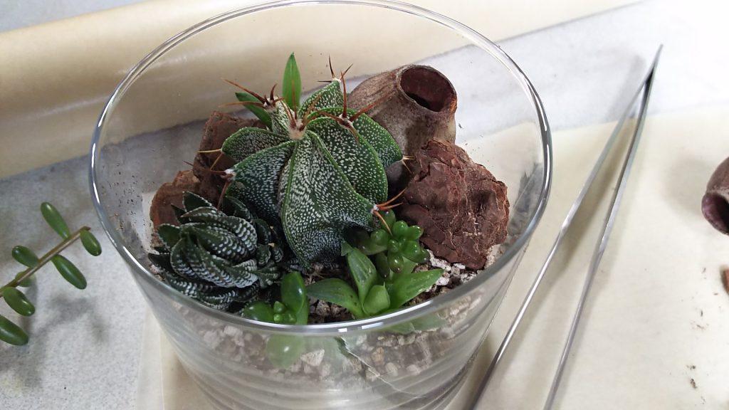 多肉植物・サボテンのテラリウム