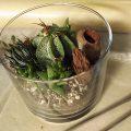多肉植物とサボテンのテラリウム
