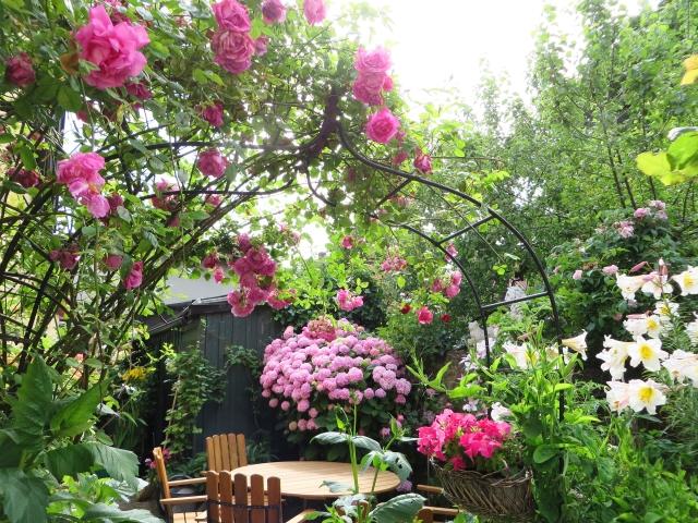 ガーデンのアジサイ