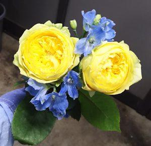 黄色のバラとデルフィニウム