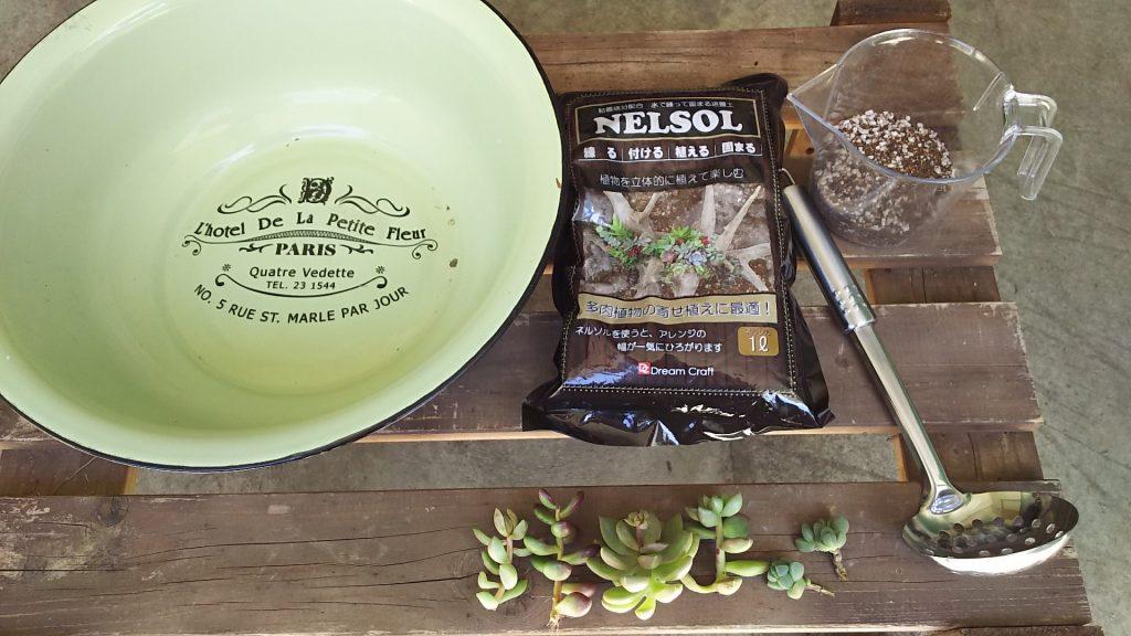ホーロー洗面器とネルソルと多肉植物