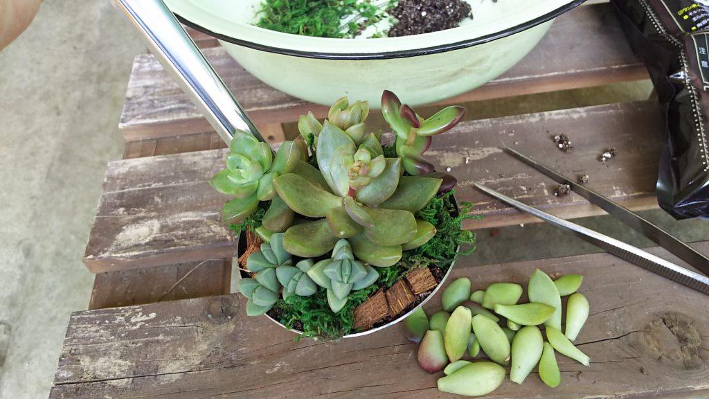 お玉に寄せ植えされた多肉植物